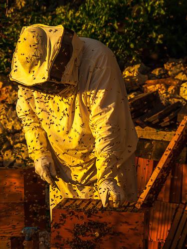Natura Rab - Pčelarenje